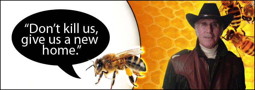Las Vegas Bee Removal - No Kill Relocation | Tom's Bee Hives